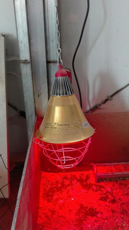 Riflettore in alluminio dm 21 cm for Lampada infrarossi riscaldamento pulcini